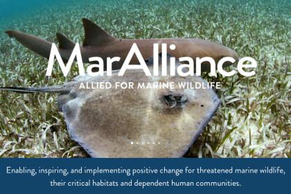 MarAlliance___Allied_for_Marine_Wildlife